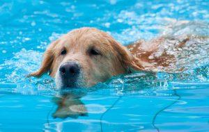 Cachorro na piscina: entenda os cuidados com animais de estimação